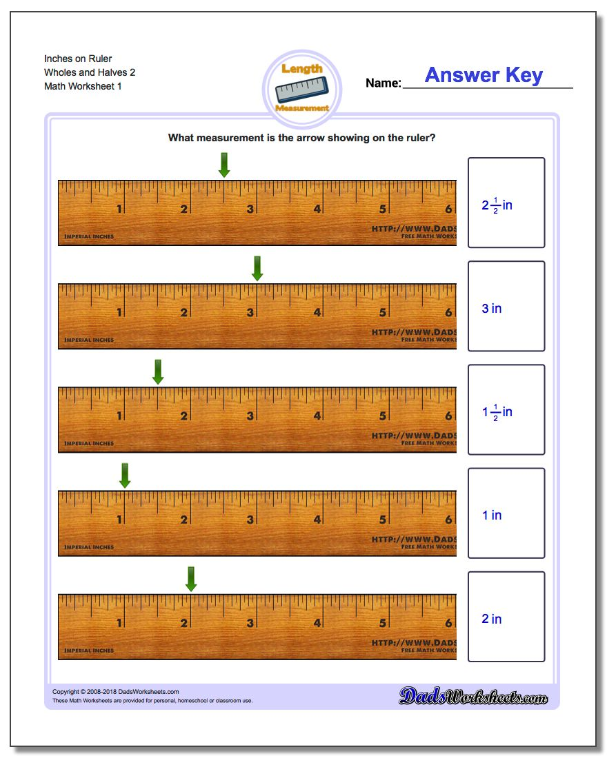 Inches Measurement Worksheet on Ruler Wholes and Halves 2
