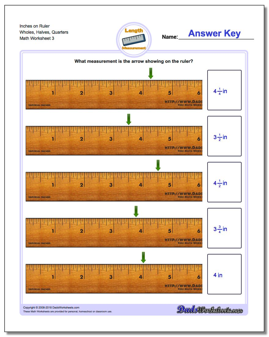 Inches on Ruler Wholes, Halves, Quarters Worksheet